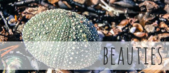 The Coromandel Peninsula {Big Shells & Beaches}
