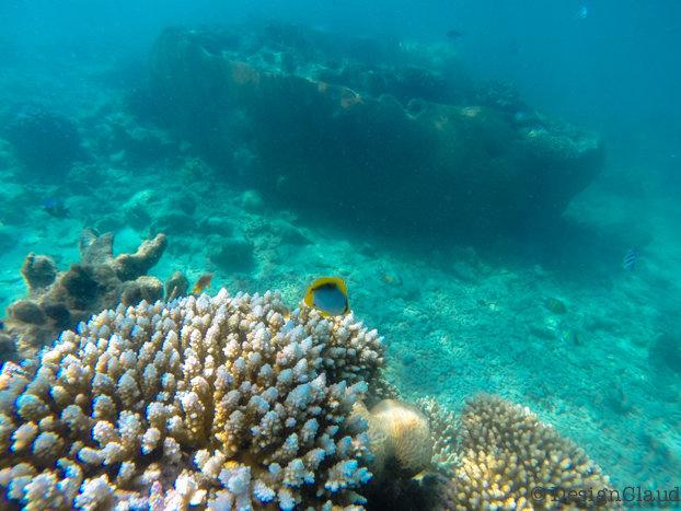 Snorkeling in Fiji – Island Life