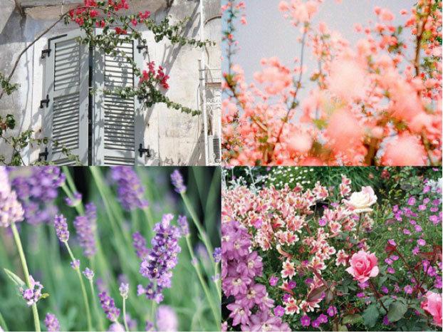 A Romantic Garden