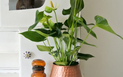 Botanisch interieur home tour!